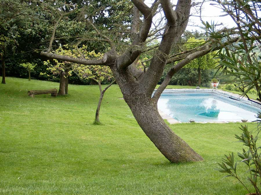 Jardines con piscina for Jardin con piscina