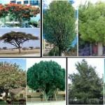 Diversas formas de árboles